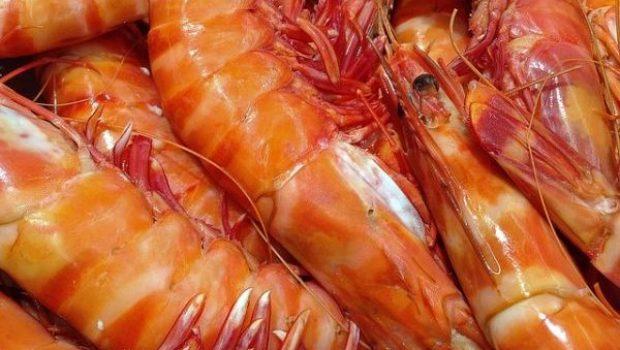 shrimp-1141476_640